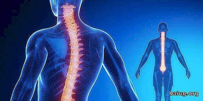 Rückenmark: Anatomie und Physiologie - de.baiug.org